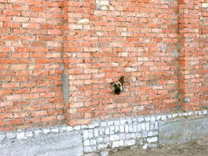 Brick wall dog is watching you
