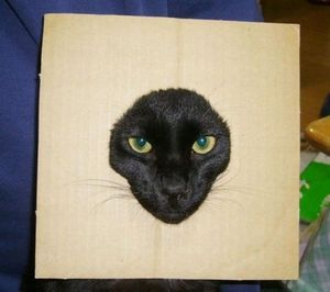 Cardboard cat is watching you