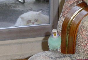Cat watching parrot
