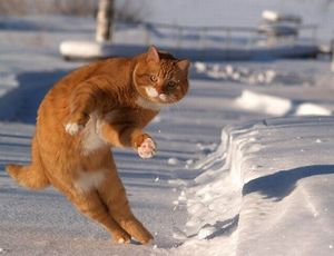 Cat with invisible snowboard