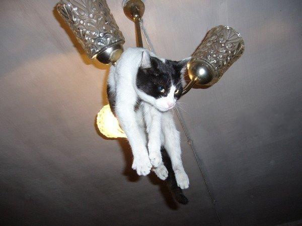 https://roflzoo.com/pics/042010/ceiling-cat-is-watching-you-big.jpg