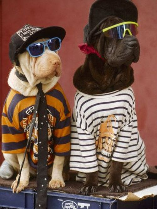 WOOFcool stuff for dogs  Where your dog wants to shop