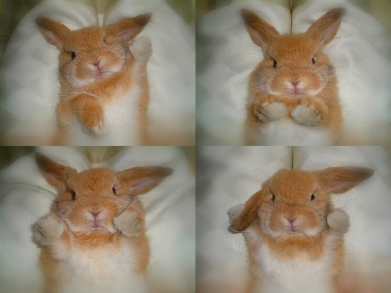 cute bunny funny pictures of animals