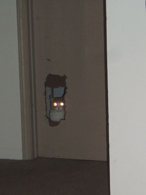 Door cat is watching you