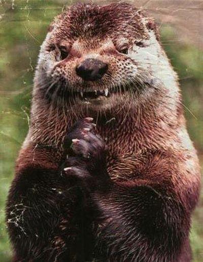 evil-otter-is-evil.jpg