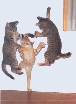 Flying ninja cats snapshot