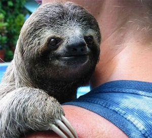 Happy sloth is happy
