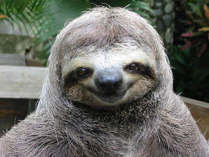 Happy smiling sloth