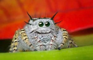 Happy spider is happy