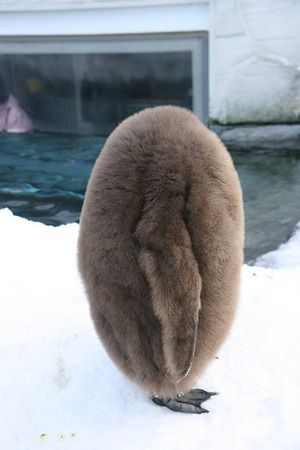 Headless penguin