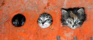 Hole cats are watching you