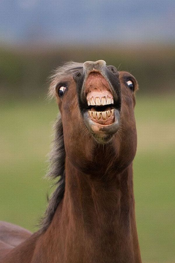 Smiling Animals With Teeth