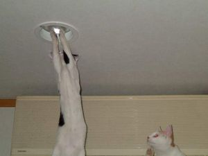 How Many Cats Does It Take to Screw in a Lightbulb?