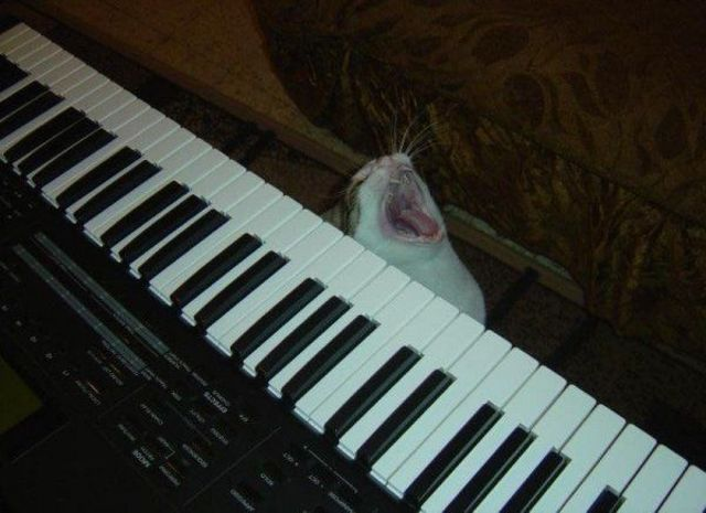 Keyboard cat is sleepy - Funny pictures of animals