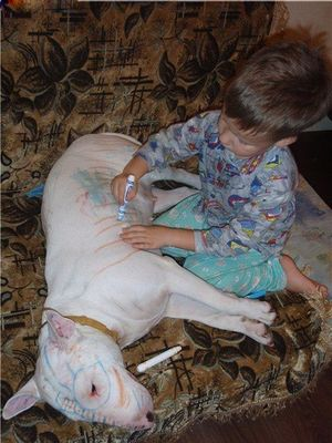 Kid paints bull terrier