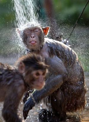 Monkey shower