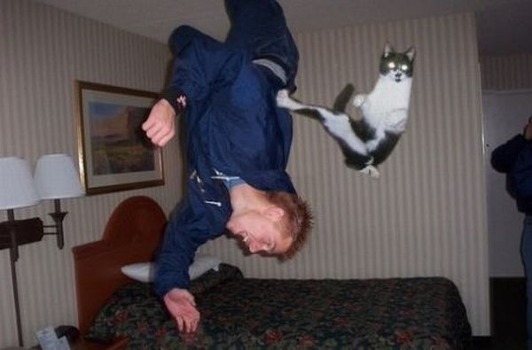Ninja Animals