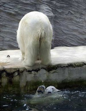 Owned polar bear