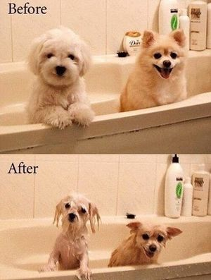 Puppies before and after bath