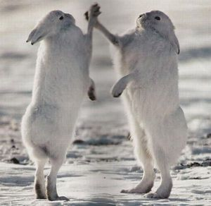 Rabbit high five