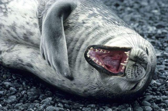 rofl-seal-big.jpg