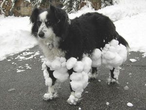 Snowball dog is not amused