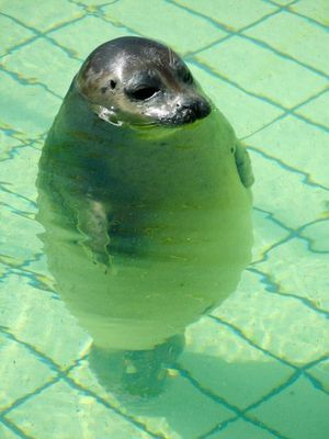 Standing seal
