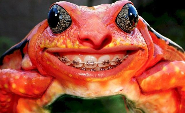 teeth bracket frog funny pictures of animals