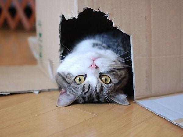 Upside Down Box Cat