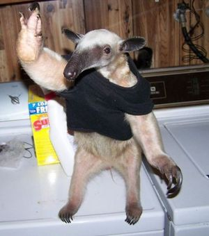 Anteater high five