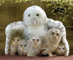 Baby owls with plush substitute mother