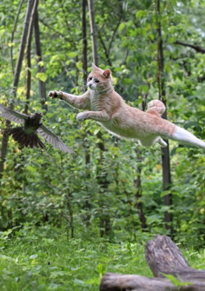 Cat jumping after bird