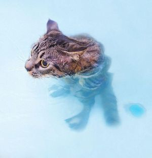 Cat standing in the water
