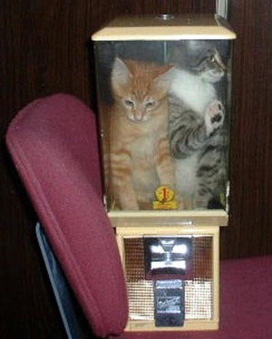 Cats in a a blender