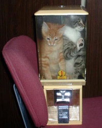 Cats in a a blender - Funny pictures of animals