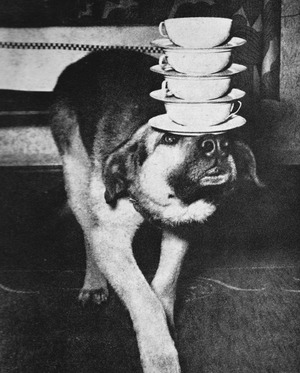 Dog balancing tea cups