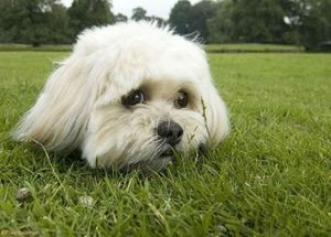Dog head in the grass