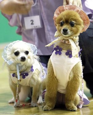 Dressed dogs