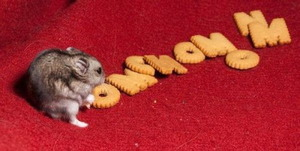 Mouse cracker om nom nom