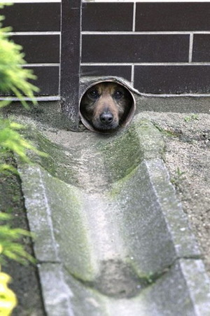 Pipe dog is watching you