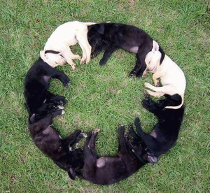 Puppies sleeping in a circle