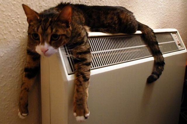 Radiator Cat
