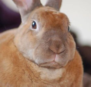 Serious rabbit