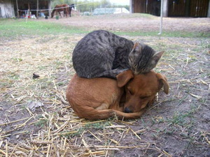 Cat sleeping on a dog