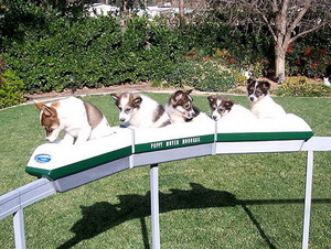 Puppy monorail