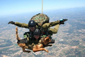 Skydiving dog