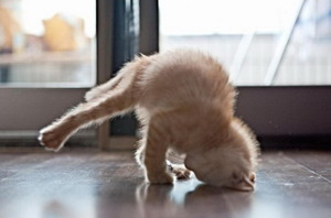 Breakdancing kitten