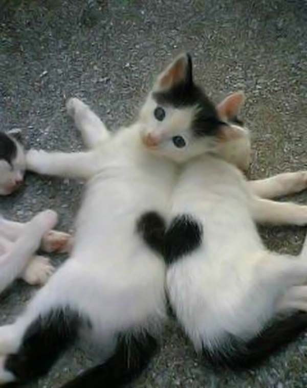heart-kittens-big.jpg