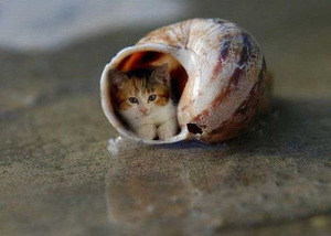 Kitten in a shell