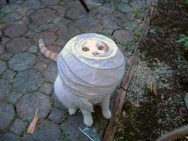 Cat in a lamp shade funny pictures of animals cat in a lamp shade aloadofball Image collections